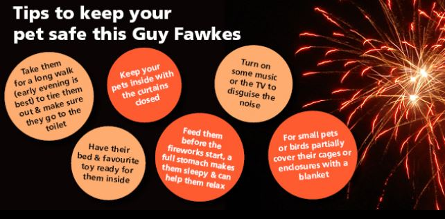Tips to keep your pets safe and calm on guy fawkes