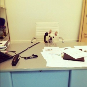hilarious-dog-who-have-no-idea-what-theyre-doing-so this what you do at work
